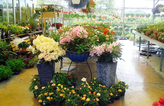 Galeria Garden
